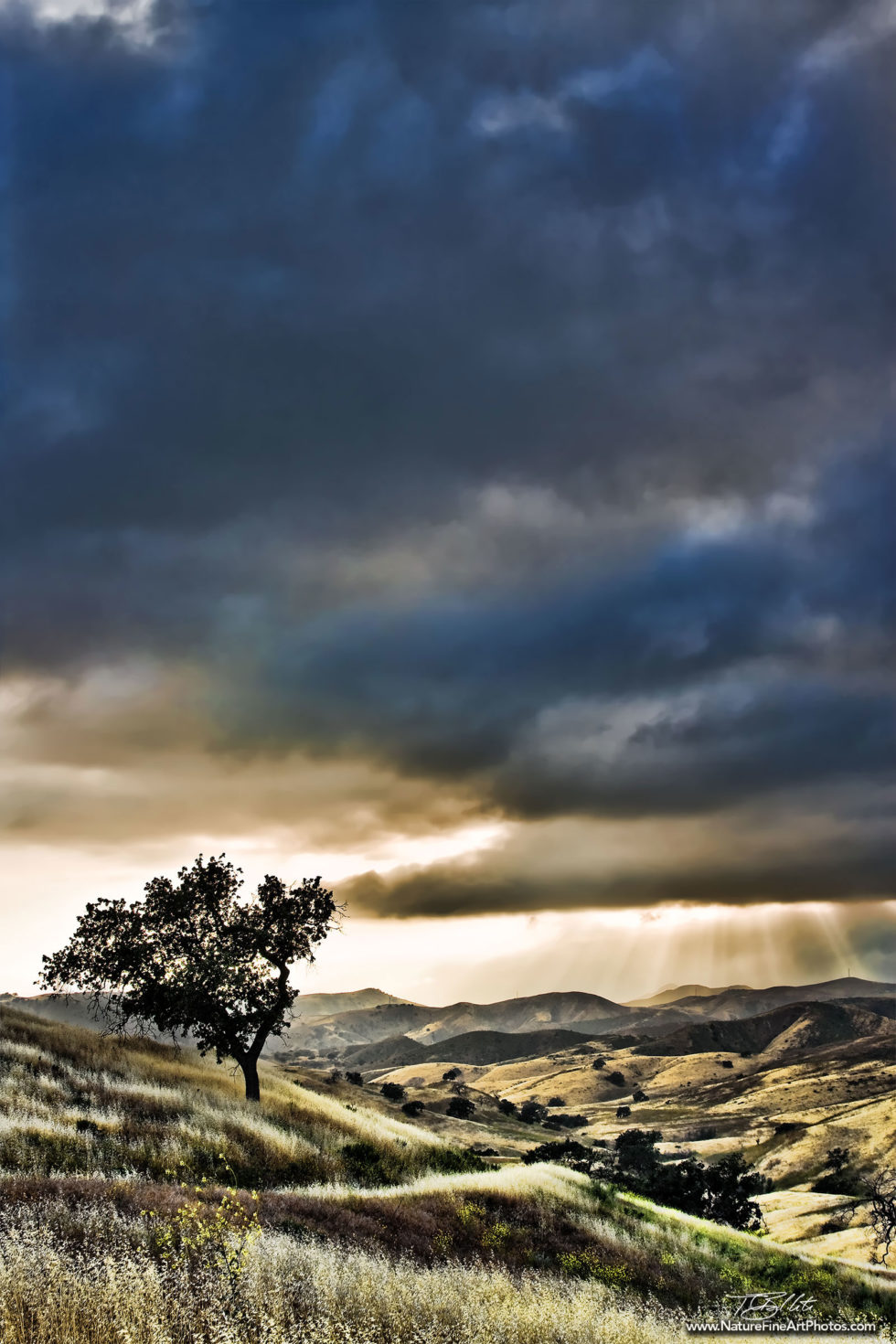 Nature Photo of Ahmanson Ranch