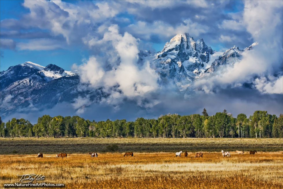 Photo of Horses Grazing in the Grand Tetons