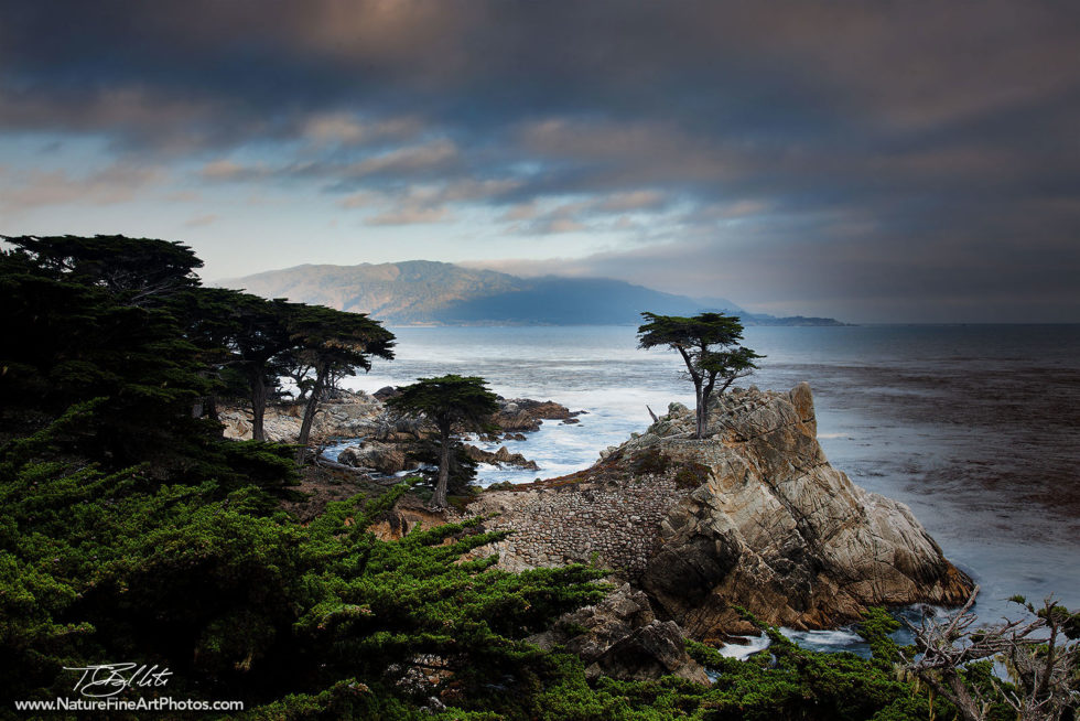 Fine Art Photo of the Lone Cypress Tree in Monterey
