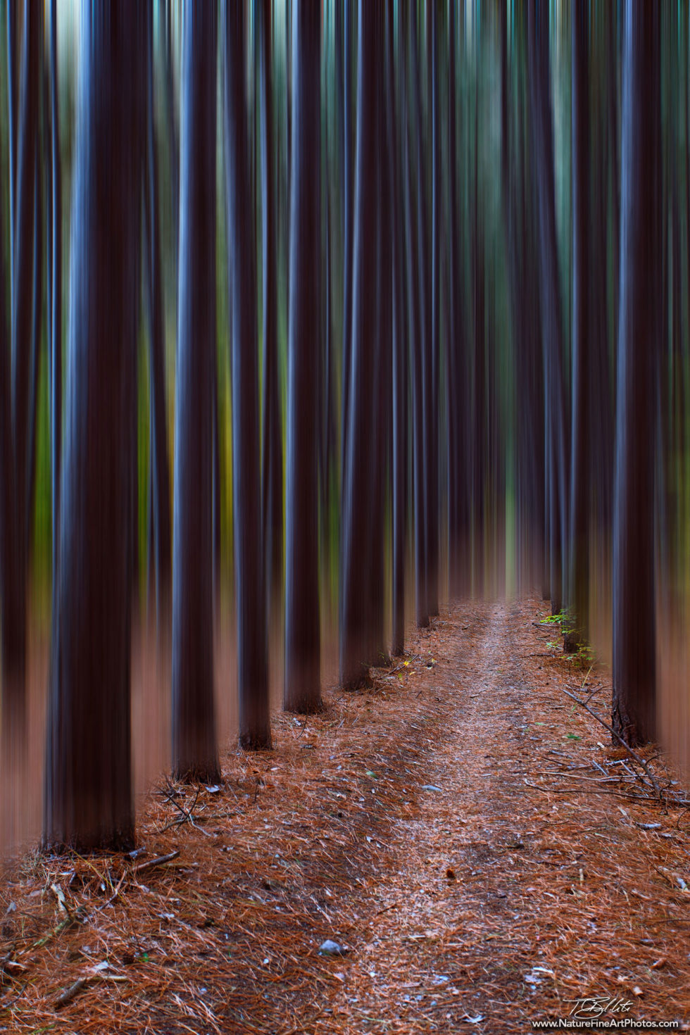 Fine Art Photo of Trees in Motion