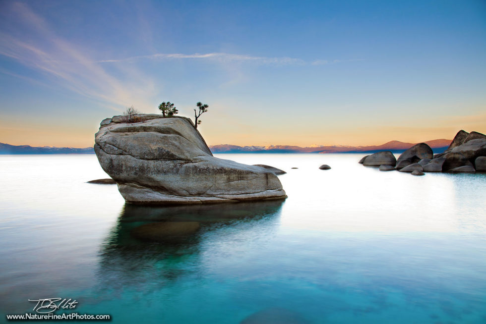 Fine Art Photo of Bonsai Rock