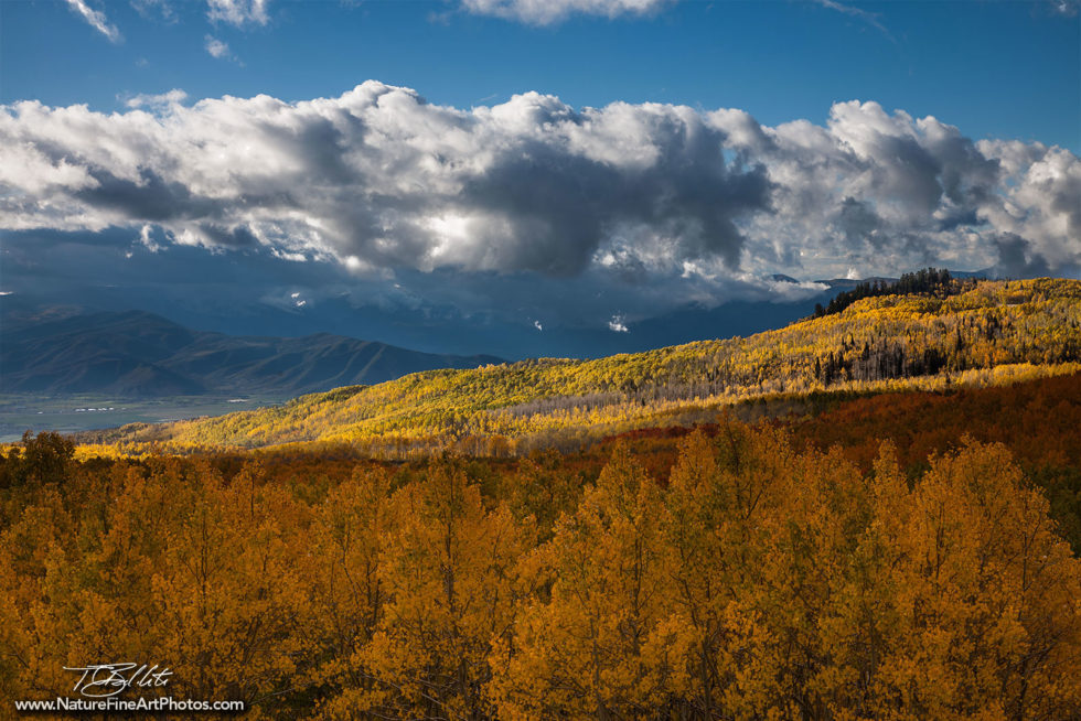 Utah Photo of Aspen Trees