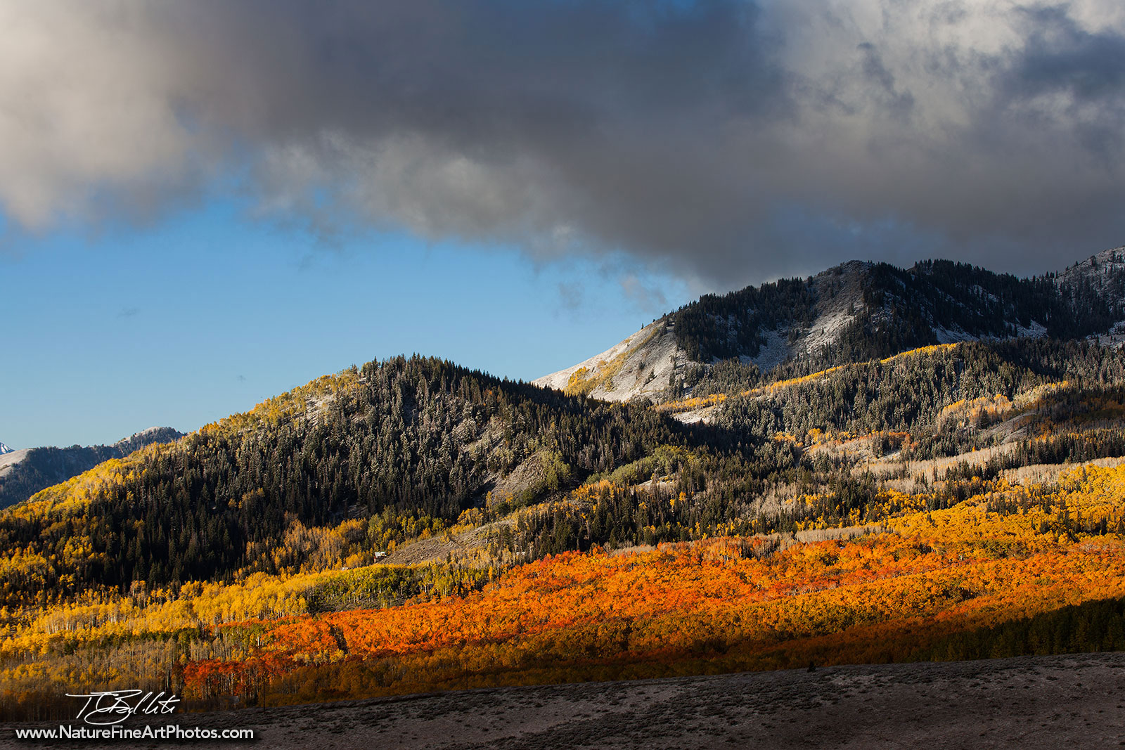 Utah Fall Foliage Photo