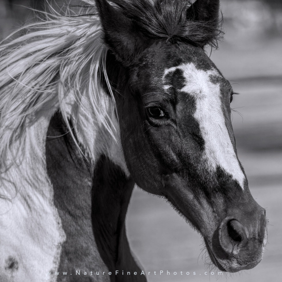 photograph of paint horse