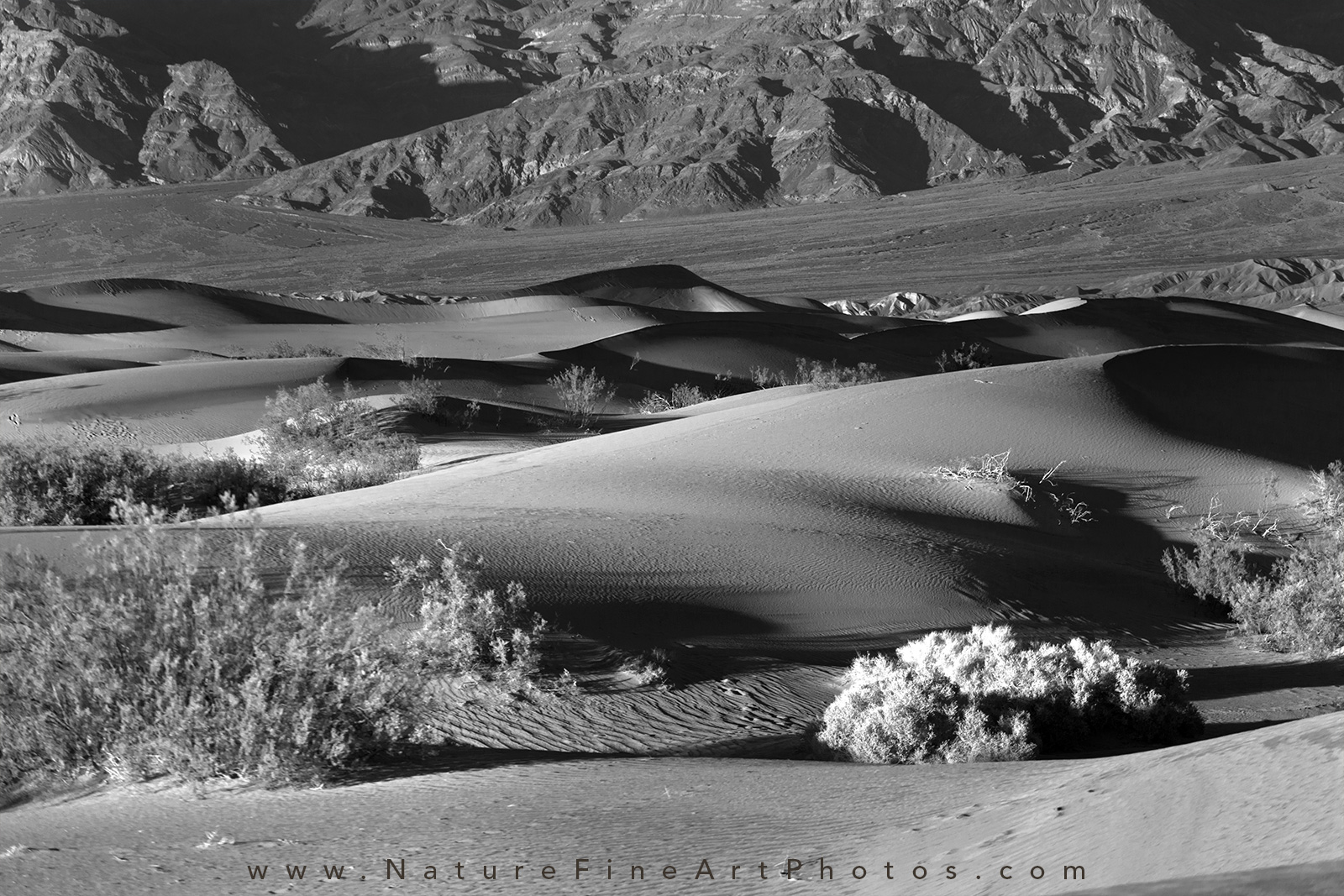 photo of mesquite dunes in death valley national park
