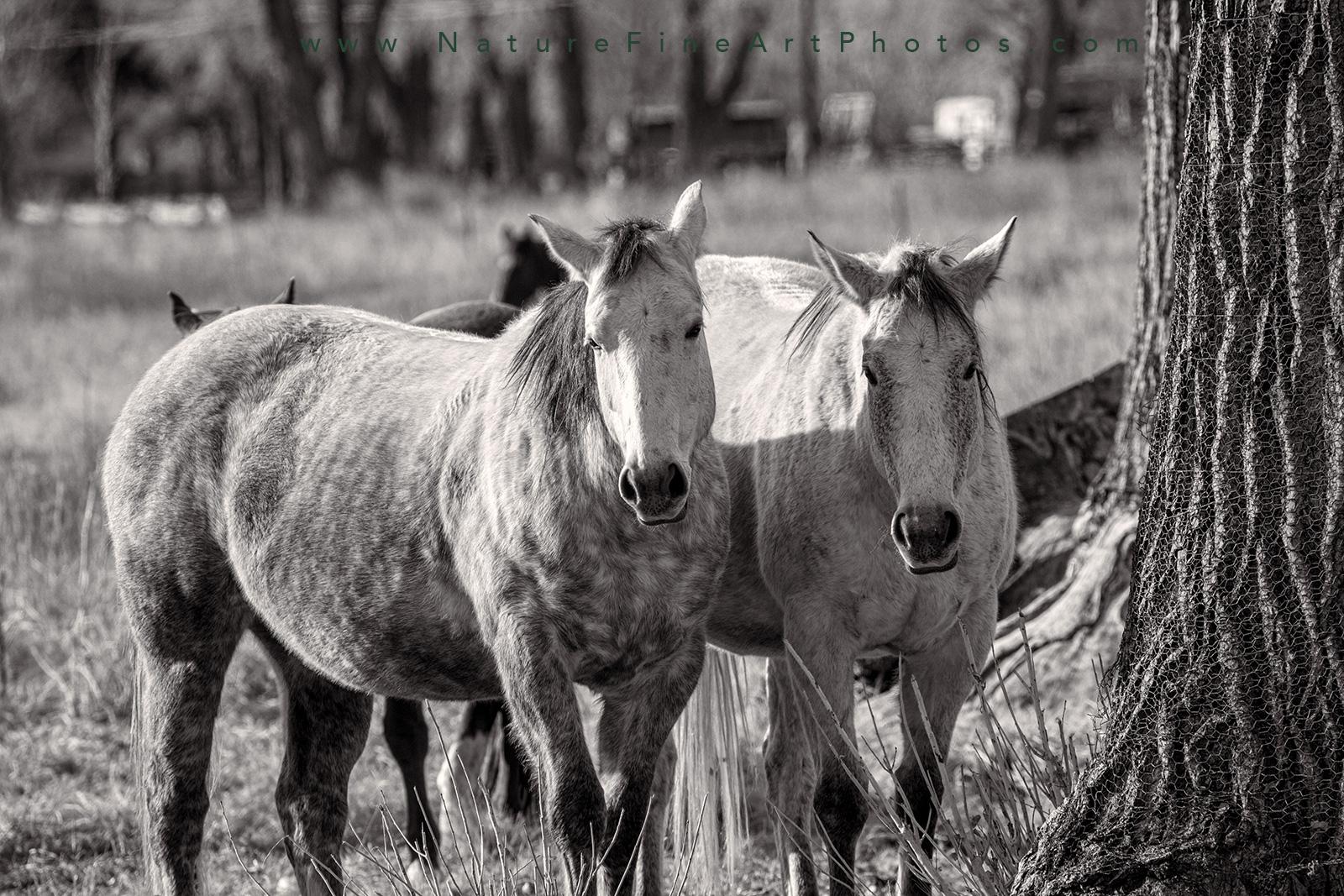 Big mamas horse photo