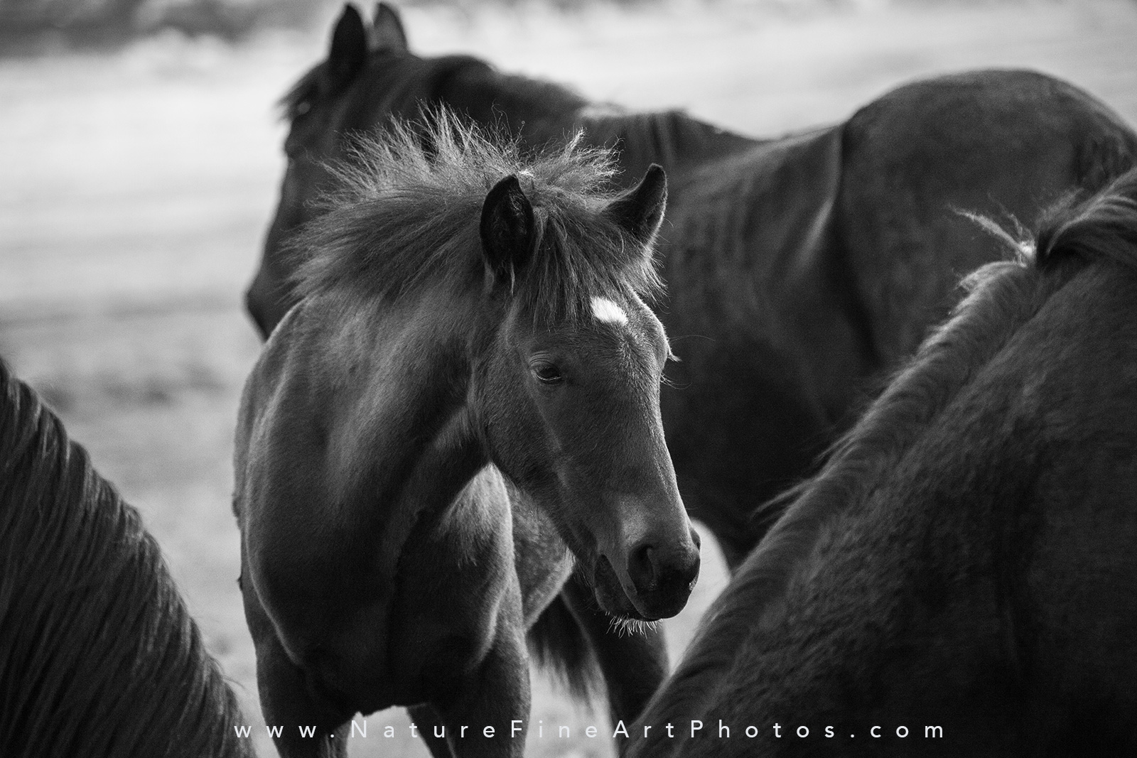 wild baby horse photo among a herd