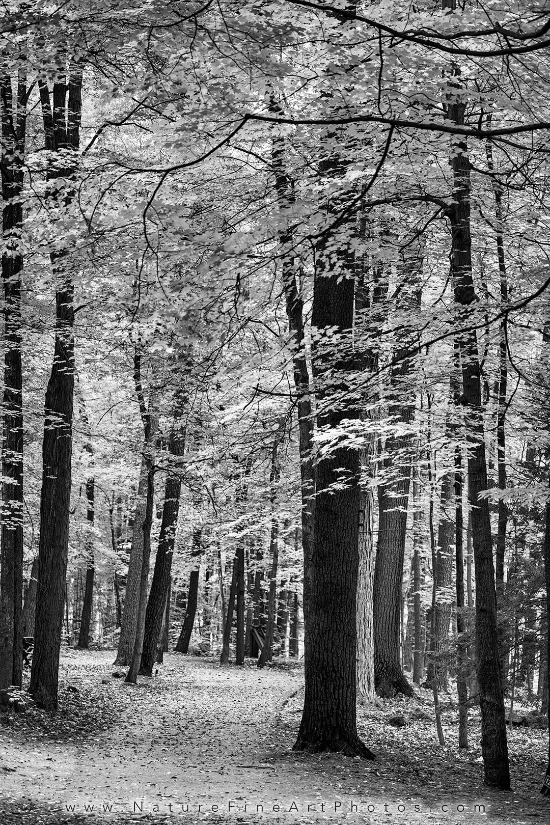 Black And White Photos Nature Photos