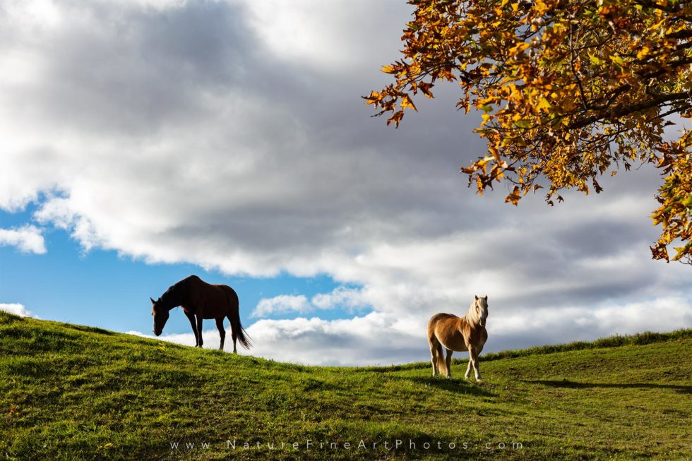photo of horses grazing