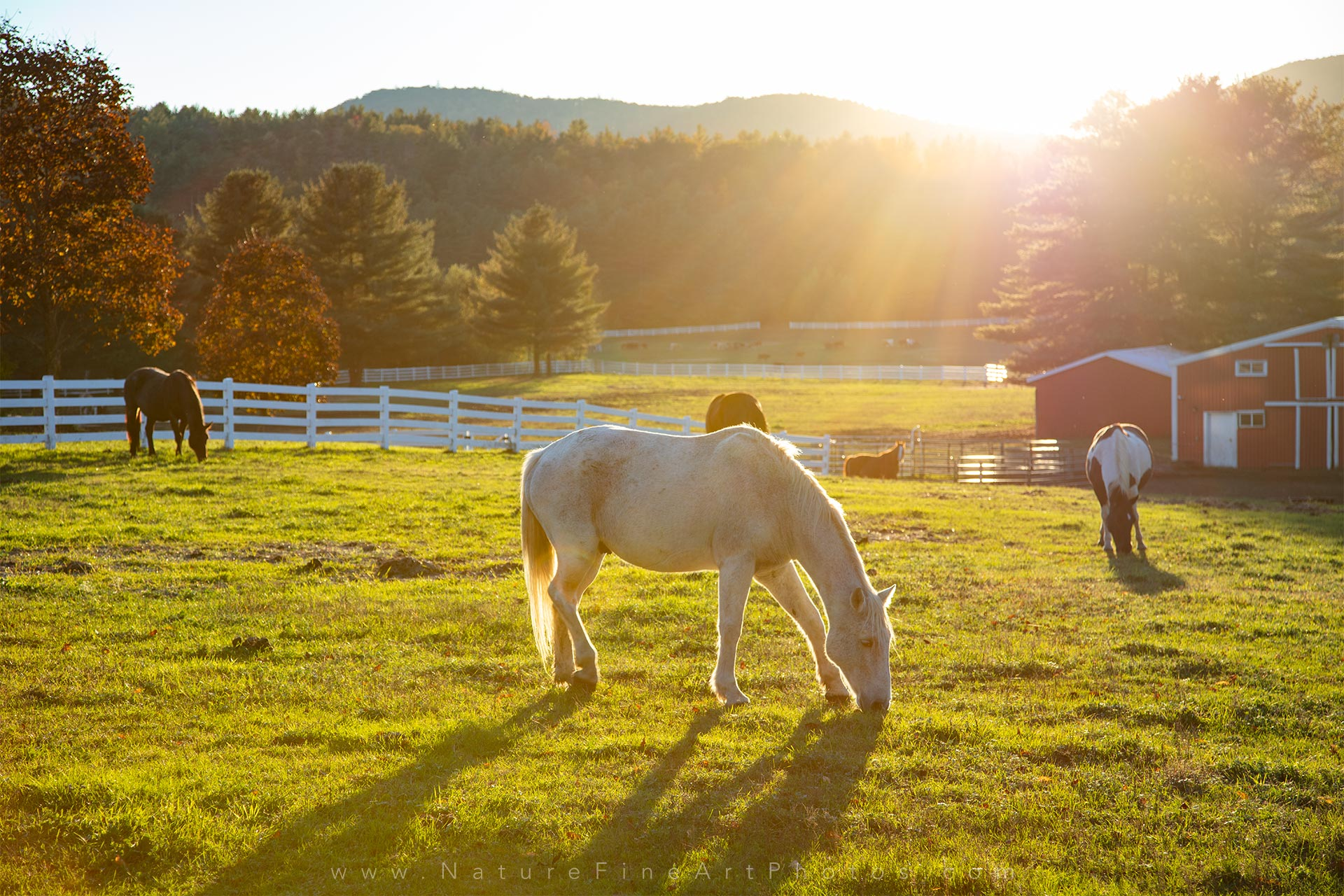 Horses Grazing Farm Life Photo | Nature Photos