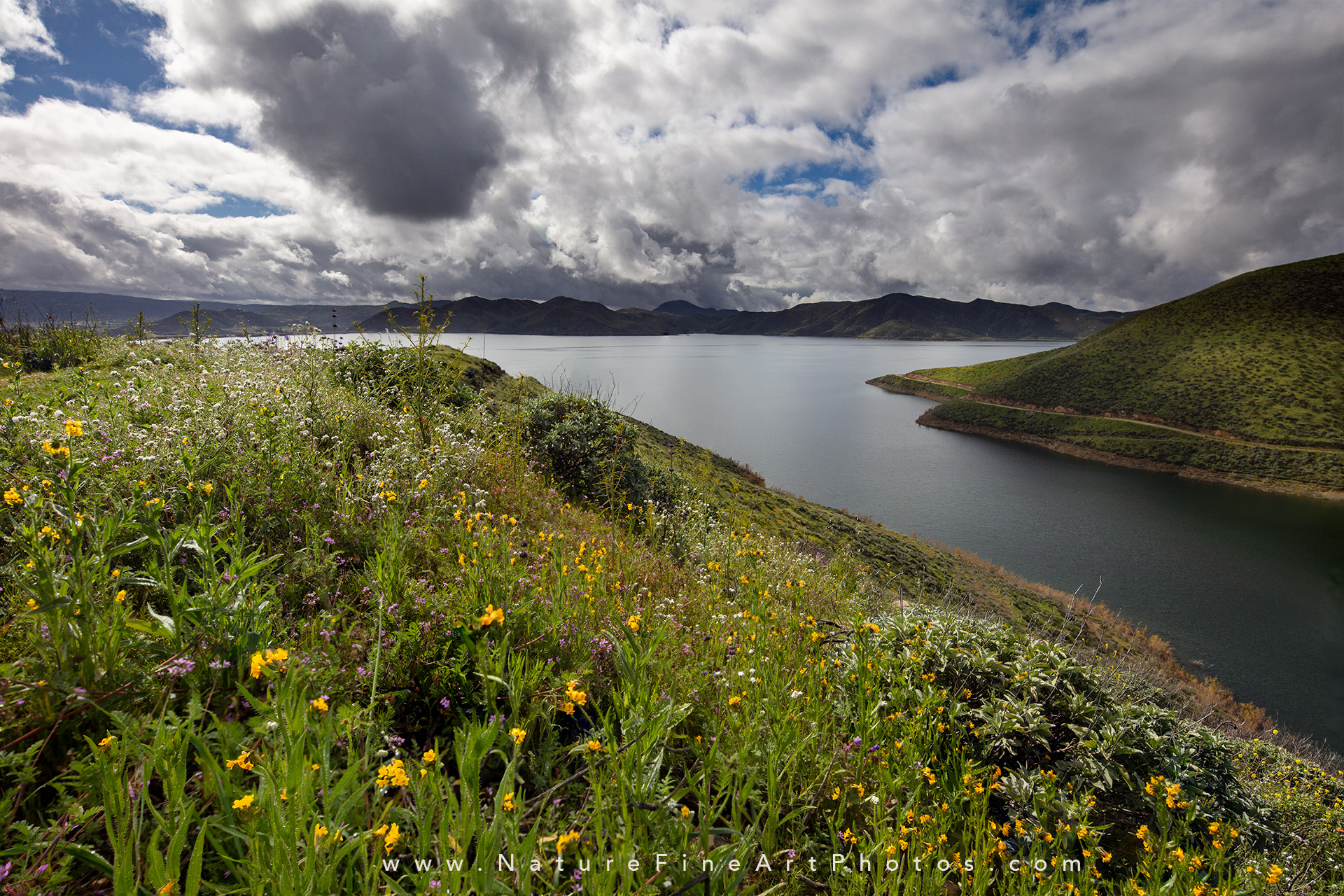 Diamond Valley Lake wildflowers
