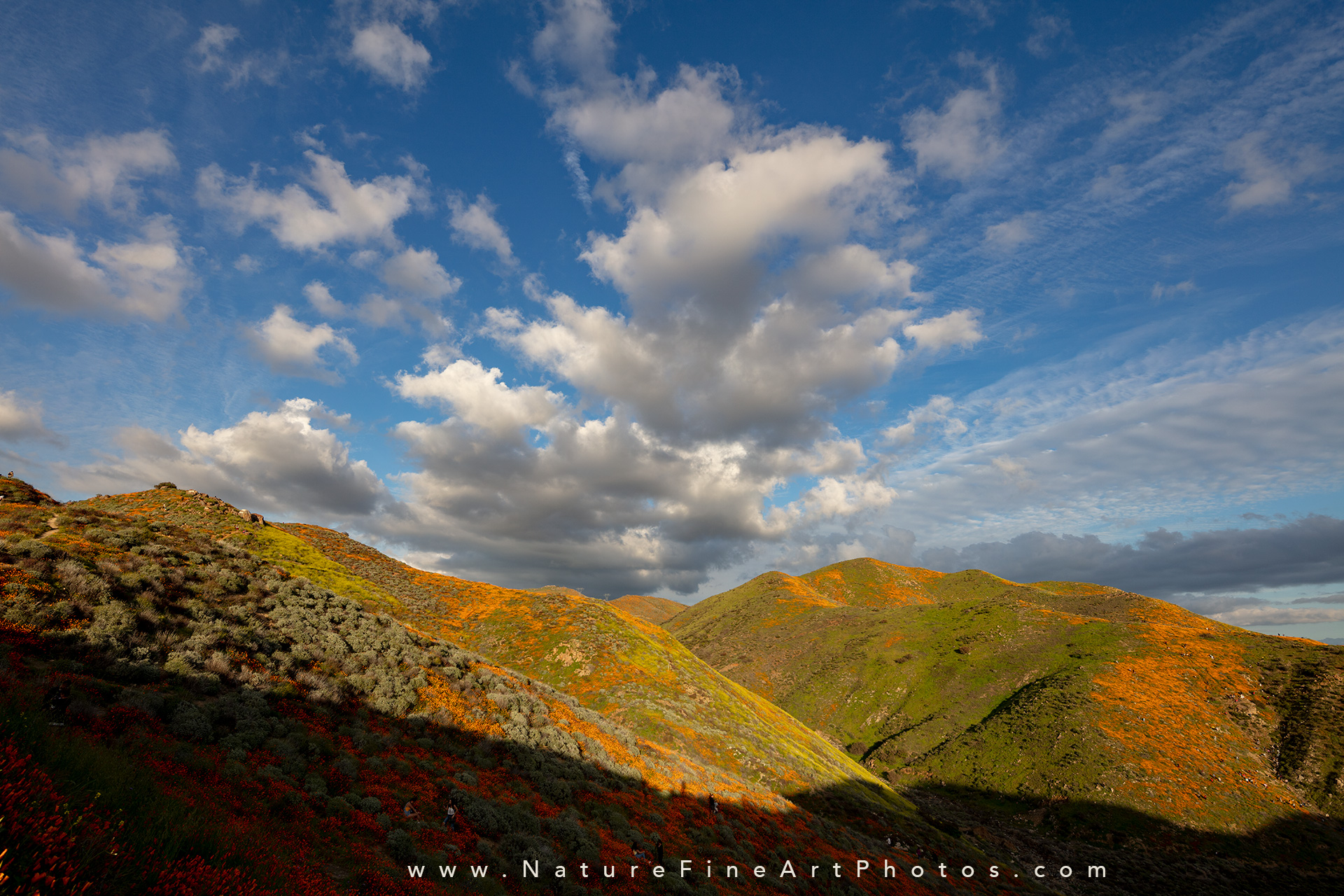 Walker Canyon super bloom poppies