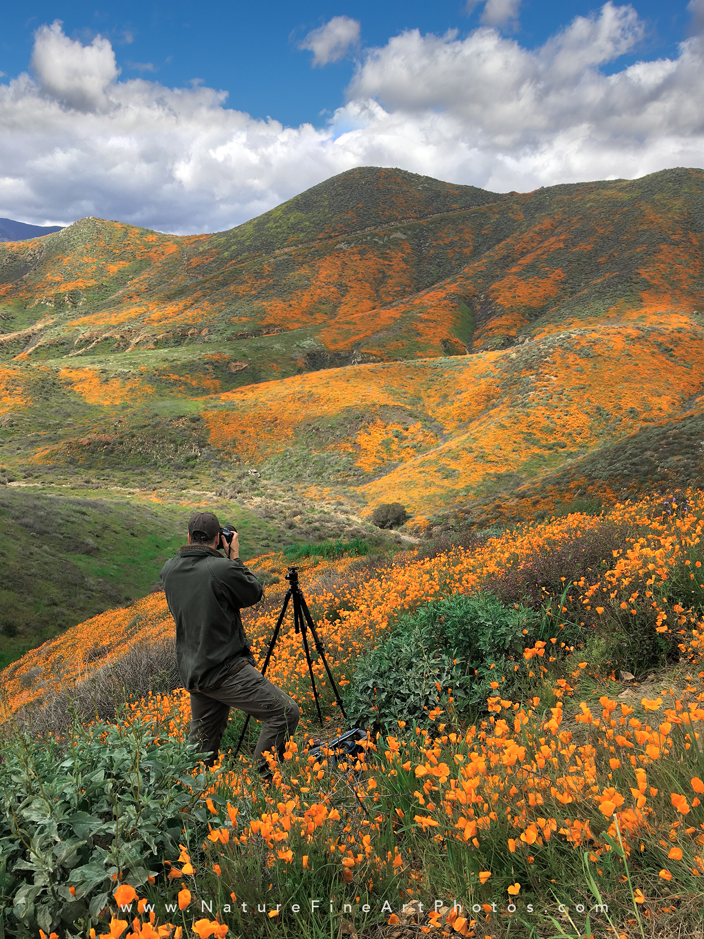 photographer standing among poppies